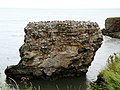 Marsden Rock - geograph.org.uk - 918267.jpg