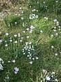 Meadow with snowdrops and crocusses.JPG