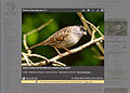 Mediaviewer-mockup-reuse 02.jpg
