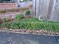 Memorial garden to Tony Burke, Liverpool.jpg