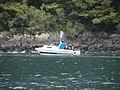 Milford Sound, South Island - panoramio (38).jpg