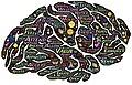 Mindfulness brain.jpg
