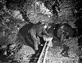 Miners loading a basket with ore in underground claim no 44 near Bonanza Creek, Yukon Territory, March 1901 (AL+CA 2975).jpg