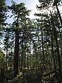 Mixed Douglas-fir - Western Hemlock forest, Alberni, BC (7196206116).jpg
