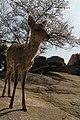 Miyajimacho, Hatsukaichi, Hiroshima Prefecture 739-0588, Japan - panoramio (6).jpg