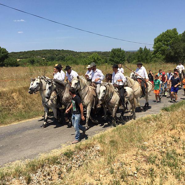 Les manadiers arrivent dans le village lors des fêtes votives pour faire traverser les taureaux