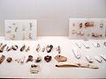 Mohenjo-daro museum relics8.JPG