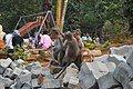 Monkeys at Pookode lake park.jpg