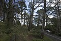 Mount Wilson NSW 2786, Australia - panoramio (41).jpg