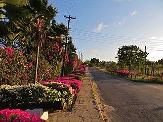 Nyali - Mount Kenya Road, bording the seaside resorts.