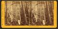 Multnomah Falls, Columbia River, by Watkins, Carleton E., 1829-1916.png