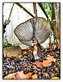 Mushroom Popped Umbrella - Flickr - pinemikey.jpg