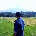 Musim Panen Di Kaki Sinabung.jpg