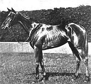 My Dear (British horse) British-bred Thoroughbred racehorse