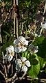 My garden 7.jpg