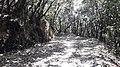 Nagarjun- shivapuri national park 20190316 132308.jpg