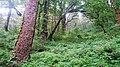 Nainital, Uttarakhand, India - panoramio - Vipin Vasudeva (8).jpg