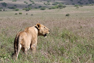 Nairobi National Park First national park in Kenya, Africa