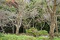 Nakanosenbon Yoshino Nara05n3200.jpg