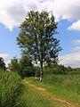Nationaal Park Weerribben-Wieden. Gemarkeerd voetpad 01.JPG