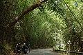 Natural Bamboo Arch.jpg