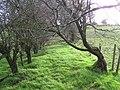 Nature takes over, Errigle - geograph.org.uk - 1046853.jpg