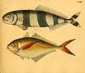 Naturgeschichte in Bildern mit erläuterndem Text (Taf. LXIII) (6058667137).jpg