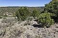 Near Ft. Stanton - Flickr - aspidoscelis (1).jpg