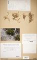 Neuchatel Herbarium Types NEU000113070.tif