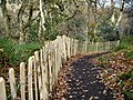 New fencing at Ness Wood - geograph.org.uk - 610463.jpg