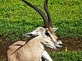 Ngorongoro Crater (40) (14148695155).jpg