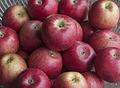 Niğde elması - Apple Niğde 01.jpg