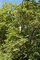Nkhotakota Wildlife Reserve, Malawi (2498415131).jpg