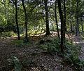 Noordlaarderbos - beuken.jpg