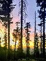Norfolk Trees at Sunset.jpg