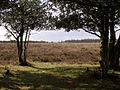 Ocknell Plain from Slufters car park, New Forest - geograph.org.uk - 145700.jpg