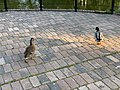 Oiseaux Parc Hôtel Ville Fontenay Bois 6.jpg