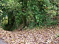 Old Bowden Way - geograph.org.uk - 1566082.jpg