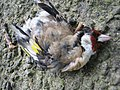 One charm is missing a goldfinch - geograph.org.uk - 525103.jpg