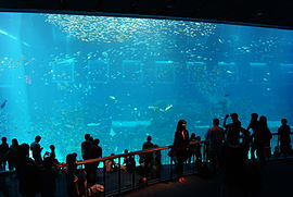 Open Ocean, S.E.A. Aquarium, Marine Life Park, Resorts World Sentosa, Singapore - 20130105-01.JPG