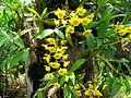 Orchidées 06.JPG