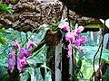 Orchidee viola.JPG