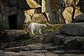 Orso at Berlin zoo (2520924642).jpg