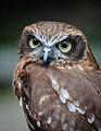 Owls @ Dragonheart, Enschede (9549432518).jpg