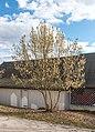 Pörtschach Johannes-Brahms-Promenade Werzers Bootshaus Haselbusch 02032019 6087.jpg