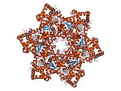 hpv virus latent i kroppen)
