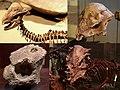 Pachycephalosauria Diversity.jpg