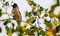 Pair of birds.jpg