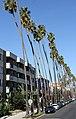Palm Trees (15386038707).jpg
