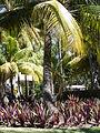 Palm trees and vegetation at Bavaro Princess Resort.jpg